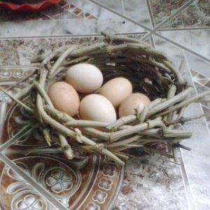 [:ro]Cuiburi[:hu]Fészkek[:en]Nests[:]